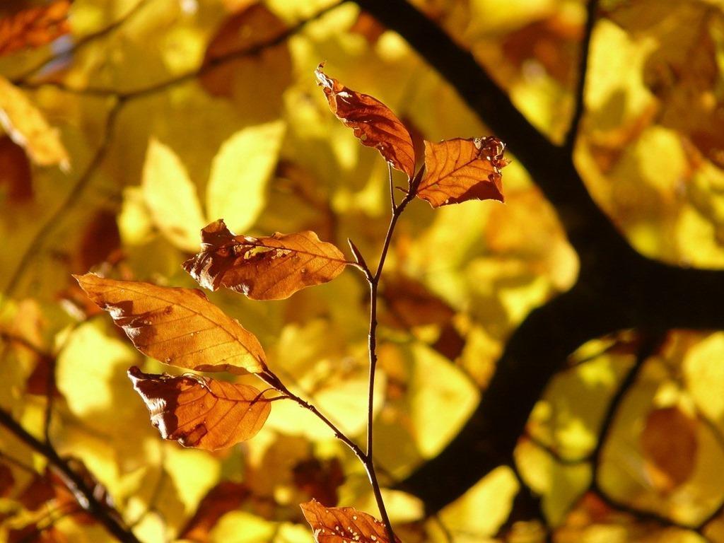 leaves-10587_1280