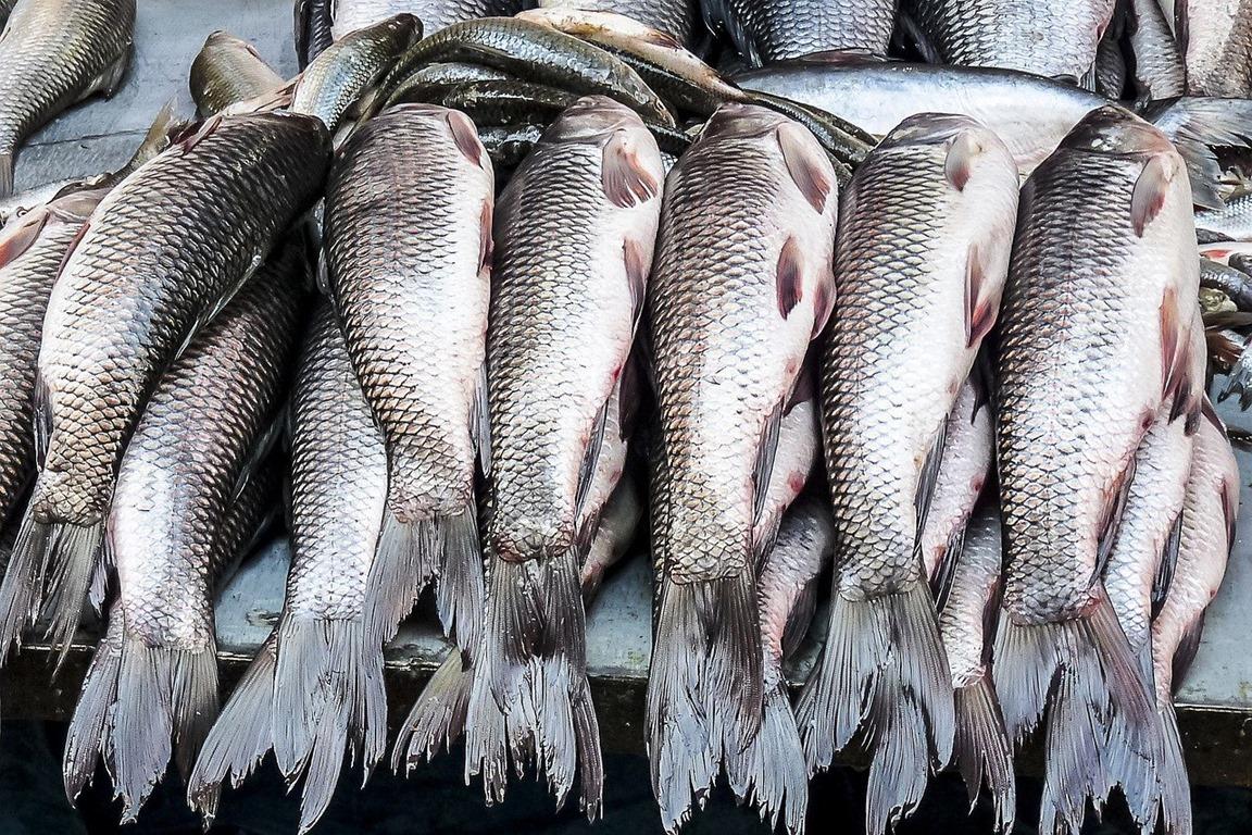 fish-5491821_1280